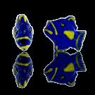 Ceramic bead fish 12mm blue yellow